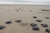 120 yavru kaplumbağa denizle buluştu