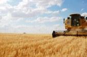 Tohumluk arpa satışı başladı