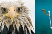 2017 Vahşi Yaşam Fotoğrafları yarışması finalistleri