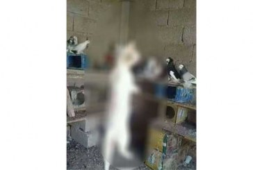 'İnsan' vahşeti:  Kediyi öldürüp Facebook'ta paylaştı