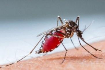 Sağlık Bakanlığı'ndan sıtma açıklaması