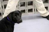 CIA kendi için çalışmak istemeyen köpeği emekli etti