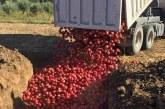 Tarım Dairesi tarafından 3500 Kg nar imha edildi