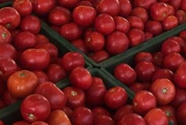 """Güney Kıbrıs KKTC domatesi """"doldu"""""""