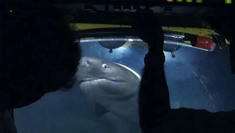 Photo of Belgesel ekibine köpek balığı saldırdı