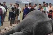 Hindistan'da tren fillere çarptı