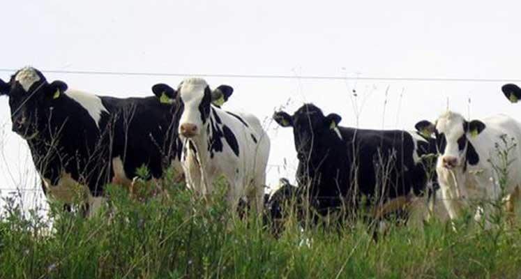 Photo of Çömlekçi Çiftliği'ndeki büyükbaş hayvan ekipmanları açık artırmayla satışa çıkacak