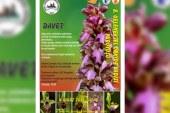 Orkide Gözlem Yürüyüşü 4 Mart'ta