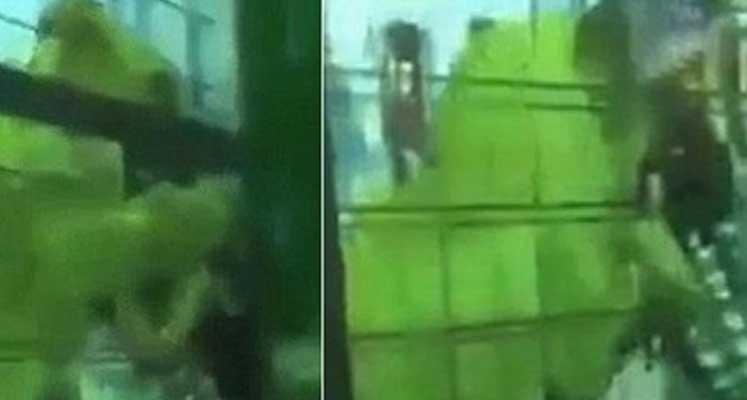 Photo of Aslan kız çocuğuna saldırdı