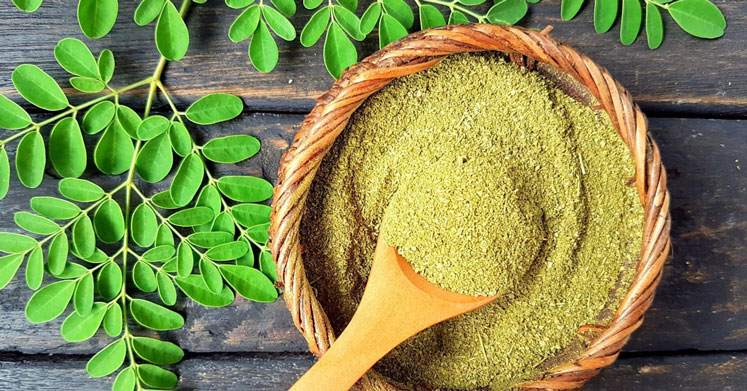 Moringa Bitkisi ve Moringa Çayı'nın Kanıtlanmış Faydaları