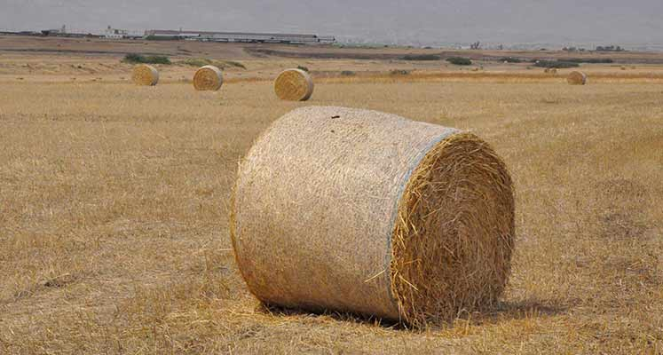 Photo of Çiftçi, olanı kurtarma derdinde