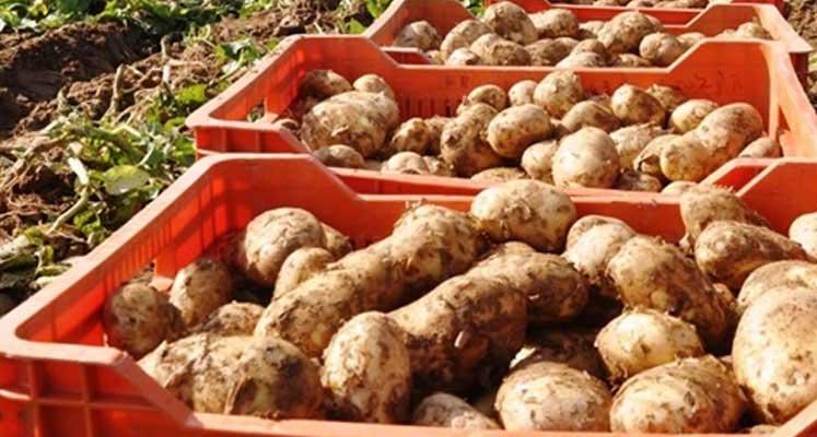 Photo of İthal patateslerde hastalık tespit edildi