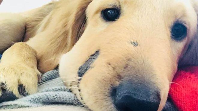 Photo of 'Kahraman' köpek sahibini çıngıraklı yılandan kurtardı