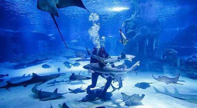 Photo of Yeni bir köpek balığı türü keşfedildi