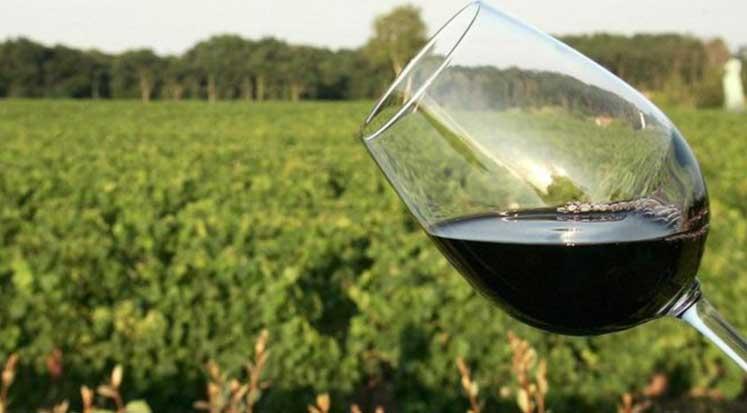 Photo of Şarabın tadında toprağın etkisi var mı?