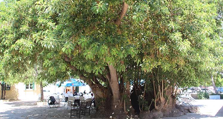 sevişen ağaç