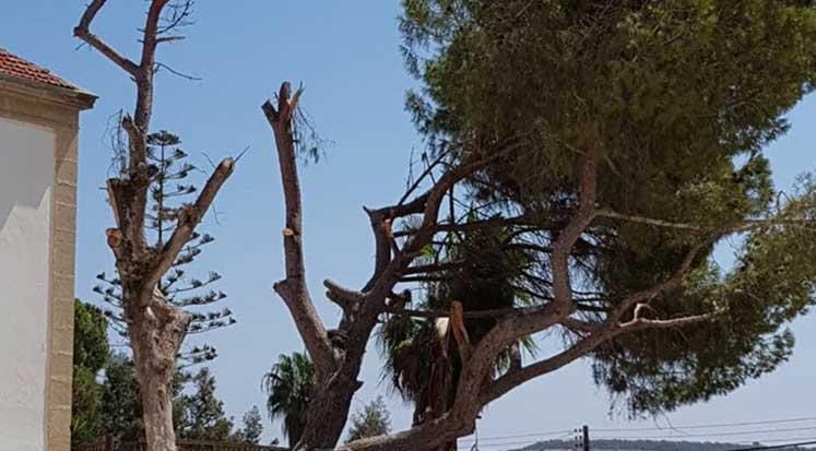 Photo of Yeşil Barış Harekatı, ağaç kıyımına tepki gösterdi