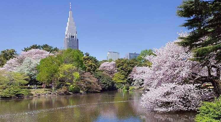 Japonya Turist