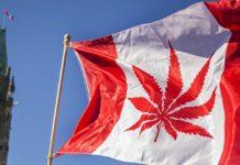 Kanada Marihuana