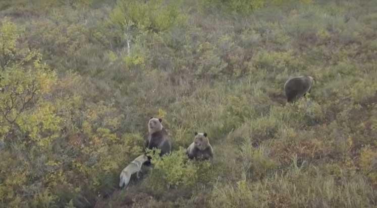 Photo of Rusya'da evsiz köpeğin boz ayılarla şaşırtan dostluğu