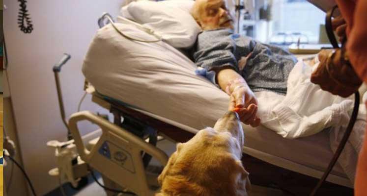 Photo of İtalya'da yoğun bakımdaki hastalara köpekli terapi uygulanıyor