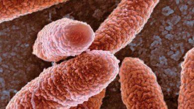 Photo of Antibiyotiğe dirençte Türkiye risk altında