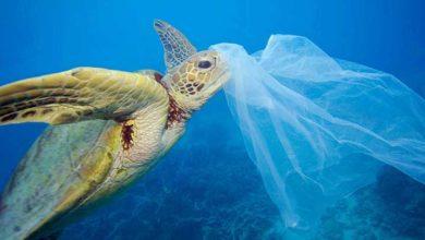 Photo of Pasifik'i yüzerek geçerken her 3 dakikada bir plastik çöple karşılaştı