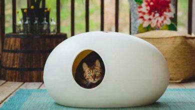 Photo of Kedilerin kum kabı dışına çiş yapmasının 5 nedeni
