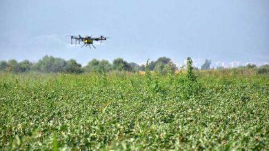 Photo of Tarım Bakanlığı: Üreticiler tarlalarda ilaçlama yapabilir