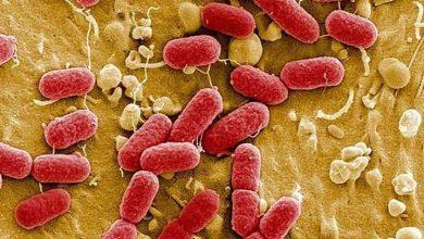 Photo of Yapay zeka sayesinde en tehlikeli bakterileri öldüren antibiyotik bulundu