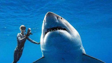 Photo of Dünyanın en iri büyük beyaz köpekbalığıyla yüzdüler