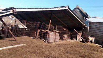 Photo of Tarım Bakanlığı: Doğal afetlerden oluşan zararlar tespit ediliyor