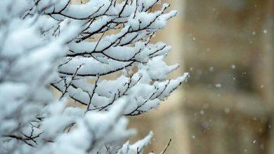 Photo of Yarın ve pazar sabahı don bekleniyor