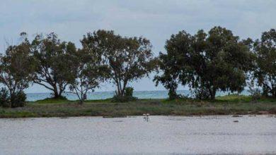 Photo of Larnaka'da yağışlar flamingolar için yeni bir ev yarattı