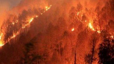 Photo of Güney Kıbrıs'ta çıkan yangınlardan ötürü 7 milyon Euro'yu aşan zarar meydana geldi