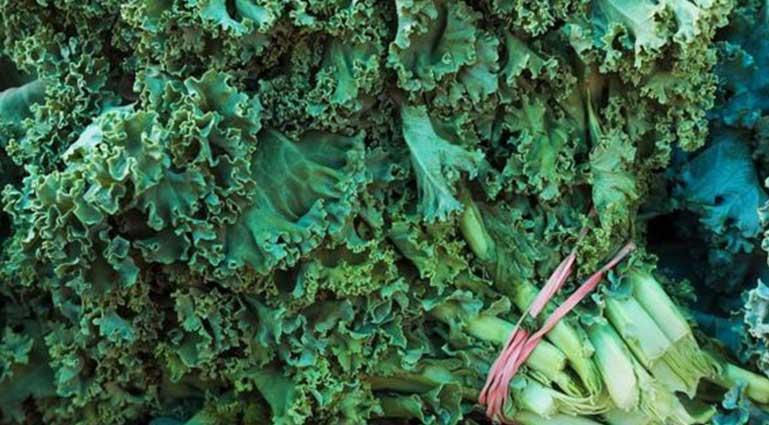 kale-yaprağı