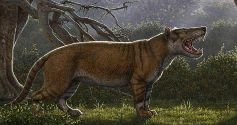 Simbakubwa Kutokaafrika - Afrika'nın en büyük aslanı