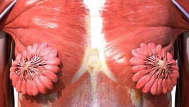 Photo of Twitter'da viral olan kadın anatomisi görseli