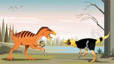Photo of Tayland'da iki yeni dinozor türü keşfedildi