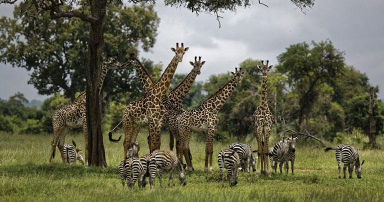 Doğa - Hayvan - Afrika