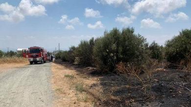 Photo of Baf'ta köpek barınağı ateşe verildi