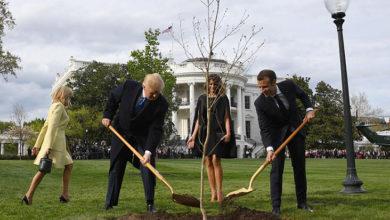 Photo of Trump'la Macron'un Beyaz Saray'ın bahçesine diktiği 'dostluk fidanı' kurudu