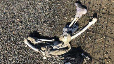 Photo of Sahile iskelet vurdu