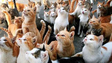 Photo of Kediler dünyaya Türkiye'den yayılmış