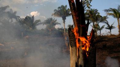 Photo of Amazonlar ALARM veriyor