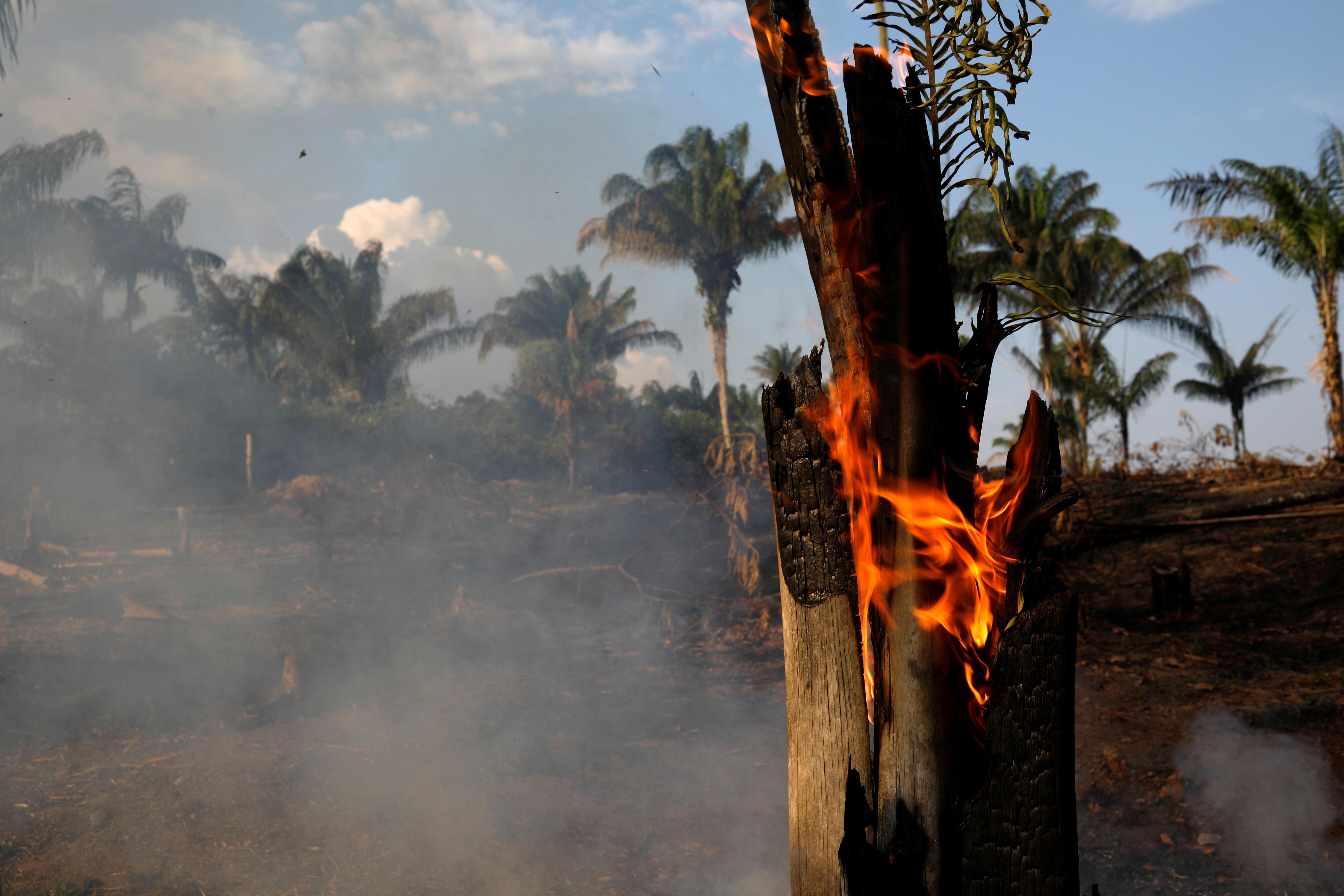 Amazon yangın
