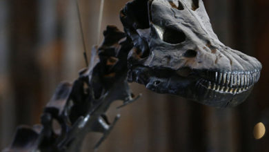 Photo of 4 metre uzunluğunda olduğu düşünülen yeni bir dinozor türü keşfedildi