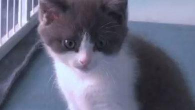 Photo of Çinli iş adamı, ölen kedisini 35 bin dolara klonlattı