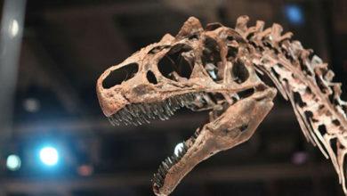Photo of Tayland'da yeni bir dinozor türü bulundu
