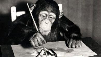 Photo of Şempanze Congo'nun 55 resmi satılacak, 200 bin dolar gelir bekleniyor